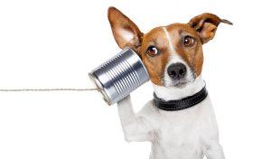 cachorro - telefone